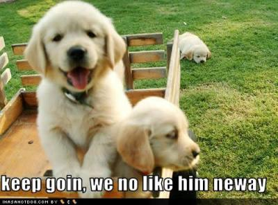 cute-puppy-pictures-keep-goin