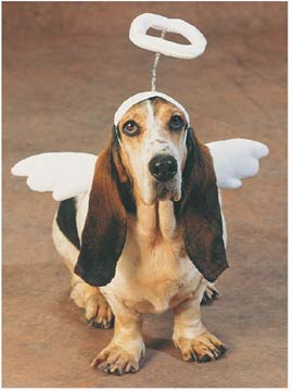 dog_angel