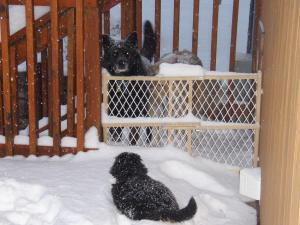 Ebbie and Kassie in the snow