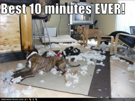 funny-dog-pictures-best-minutes