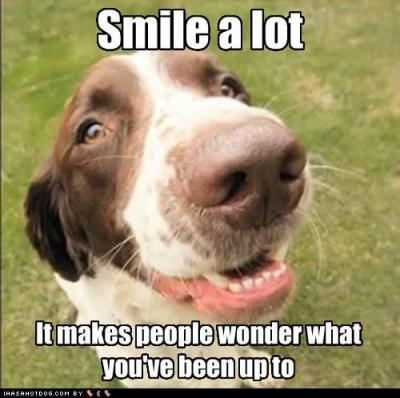funny-dog-pictures-smile-wonder