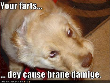 funny-dog-pictures-your-farts-cause-brain-damage