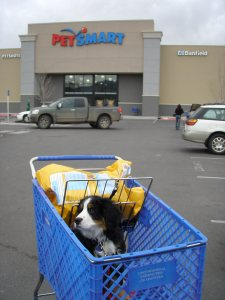Kassie at Petsmart
