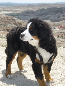 Kassie at the Black Hills