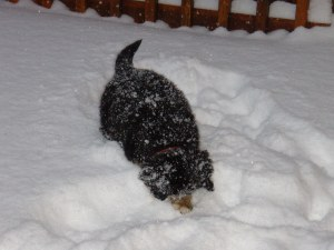 kassie playing in the snow