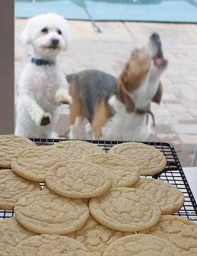 sugar cookie dogs