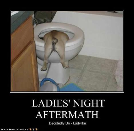 funny-dog-pictures-night-aftermath