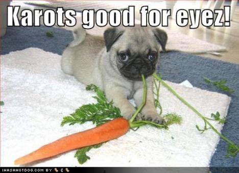 loldog-cute-puppy-pictures-kartos-good-for-eyez