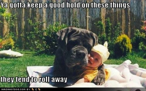 funny-dog-pictures-good-hold