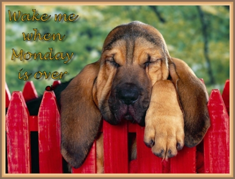 wake me when Monday is over
