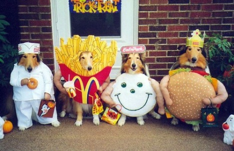 Cute Halloween Costumes for Dogs! |