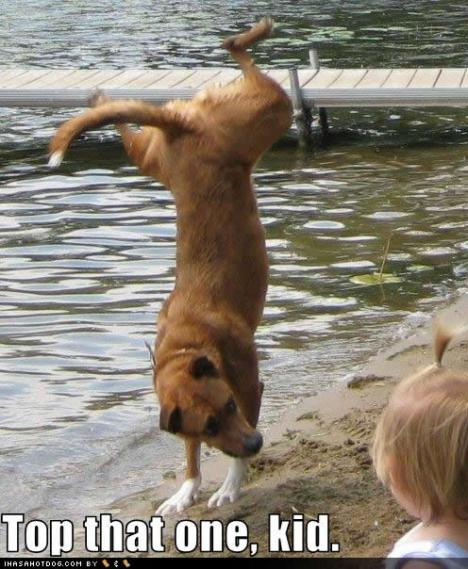 funny-dog-pictures-top-that