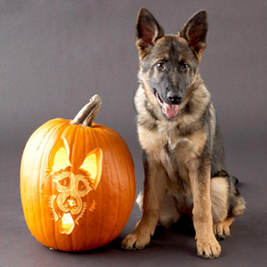 German Shepherd Pumpkin